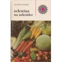 Zelenina na zahrádce
