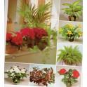 Pokojové květiny od A do Z